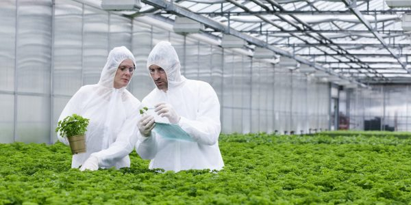 The Future of Food: To GMO or Not To GMO?