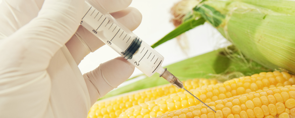 Genetically modified food – is GM really that bad for us?