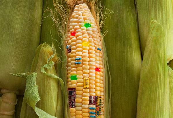 10 Things You Never Knew About GM Foods
