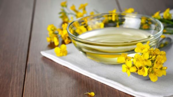 Can the Right Kind of Canola Oil be a Health Food?