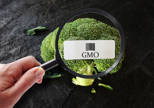 Are GMOs bad? Science Says They're Safe