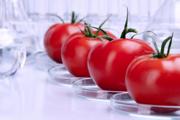 Debate Over GM Foods Continues