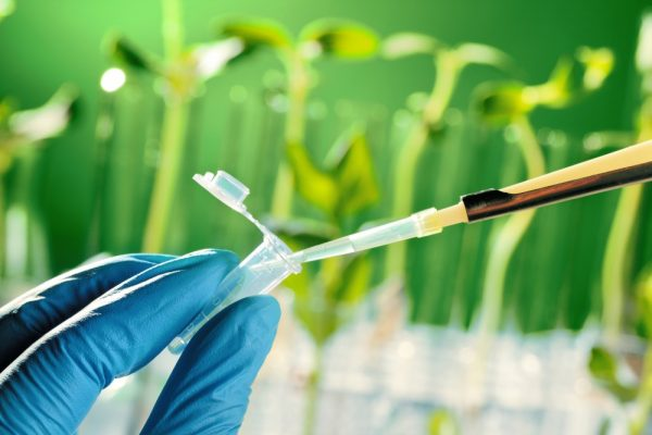 Genetically Modified Organisms Can Help With Food Security
