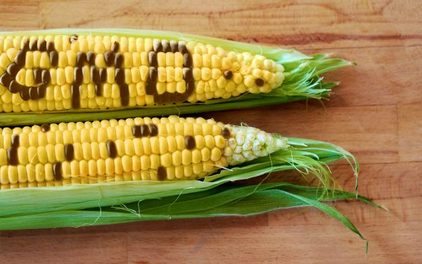 GMO's Are In Our Food, But We Aren't Being Told About Them