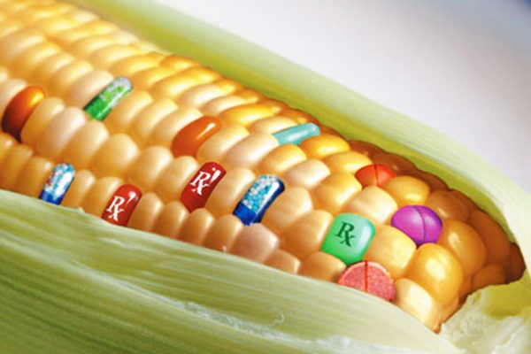 Is GMO Opposition Immoral?