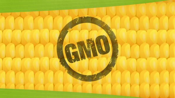 Concerned About GMOs in Your Food?