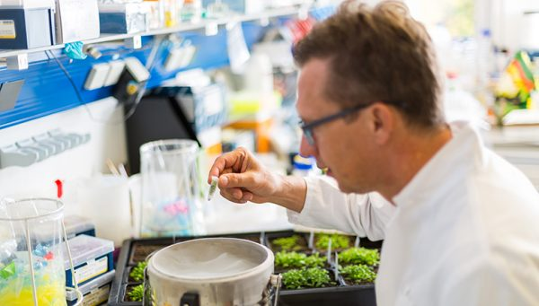 Scientists Urge New EU Rules On Gene Editing Crops