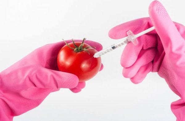 Church in Ghana Debates Genetically Modified Food