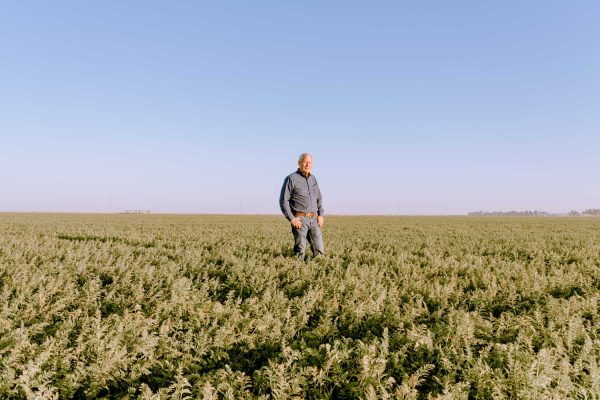 GMOs Are an Ally in a Changing Climate