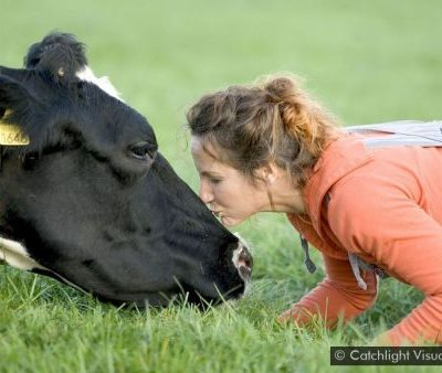 Is cow hugging the world's new wellness trend?