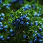 Zero-proof drinks movement spurs botanicals usage, says Kerry