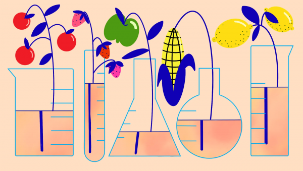 What are GMOs — and do I really need to avoid them?